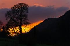 Guld- solnedgång på avverkningarna Arkivbild