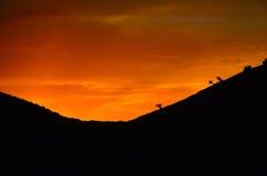Guld- solnedgång på berg Royaltyfri Foto