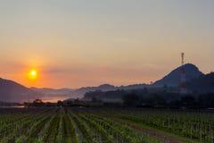 Guld- solnedgång på Silver Lake Pattaya arkivbild