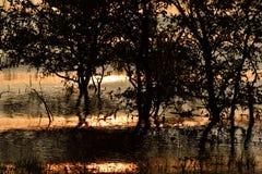 Guld- solnedgång på sjön till och med trädkontur Royaltyfria Bilder