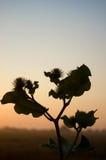 guld- solnedgångtree arkivfoto
