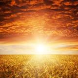 guld- solnedgång Arkivfoto