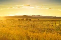Guld- solnedgång i afrikansk savannah Arkivfoto