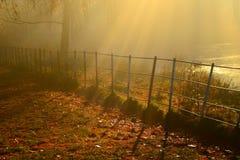 Guld- solstrålar som skiner ner på a-höstdag i hampstead london Arkivfoton