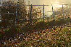 Guld- solstrålar som skiner ner på a-höstdag i hampstead london Arkivbilder