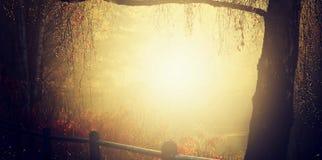 Guld- solstrålar som skiner ner på a-höstdagen som gör en glittler för trädfilialer med guld i hampstead london Royaltyfri Foto