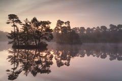 Guld- soluppgång över den lösa skogsjön Arkivfoton