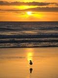 guld- soluppgång Arkivbild