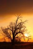 guld- soluppgång för cottonwodland Arkivfoto