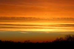 Guld- soluppgång i vinter Arkivbild
