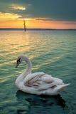 Guld- soluppgång och svan Arkivbild