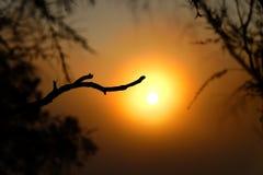 Guld- soluppgång på kullen royaltyfri foto