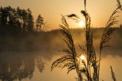 Guld- soluppgångplats Royaltyfria Foton