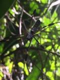 Guld- spindelrengöringsduk royaltyfri foto