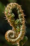guld- spiral Royaltyfri Bild