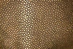 Guld- strålläder Royaltyfri Fotografi