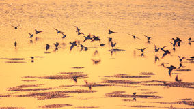 Guld- strand Arkivfoto