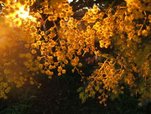 guld- sun Royaltyfri Bild