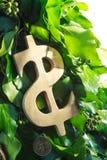 guld- symbol för dollar Royaltyfri Bild