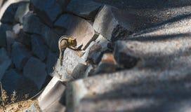 Guld- täckt ekorre på jordningen Arkivfoto