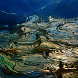 guld- terrassyuanyang royaltyfria foton