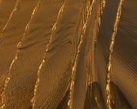 Guld- textur/bakgrund Royaltyfri Foto