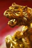 guld- tiger Royaltyfria Bilder