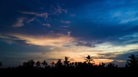 Guld- timme för solnedgång med härlig himmel och palmträd arkivfoton
