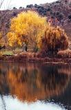 Guld- träd bredvid den Duero floden arkivfoto