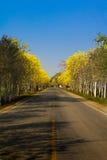 Guld- träd (talgpui) på vägrenen arkivfoton