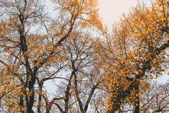 Guld- trädhöst/härliga träd i skogen Royaltyfria Foton