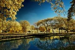 Guld- trädträdgård bredvid sjön och bron Arkivfoton