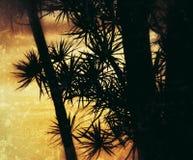 Guld- tree Royaltyfri Bild