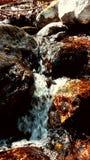 Guld vaggar i en vattenfall Arkivfoto