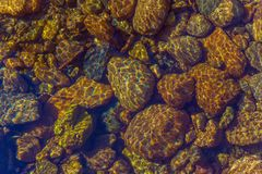 Guld- vaggar under vatten Arkivbilder
