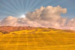 guld- vete för fält Royaltyfria Bilder