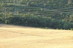 Guld- vetefält i sommarsikt Arkivbild
