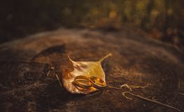 Guld- vigselringar och gula höstsidor Gifta sig i lantlig stil Arkivbild