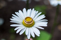 Guld- vigselringar på bukett av blommor för bruden Fotografering för Bildbyråer