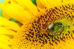 Guld- vigselringar på en solros Fotografering för Bildbyråer