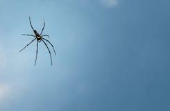 Guld- Wood spindel fotografering för bildbyråer