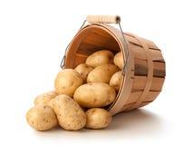 Guld- Yukon potatisar i en korg Royaltyfri Bild