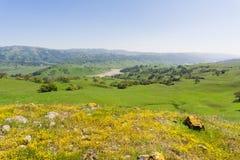 Guldfältvildblommor som blommar på slingrande jord i södra San Francisco Bay, San Jose, Kalifornien arkivfoto