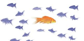 guldfisk 3D Royaltyfri Foto
