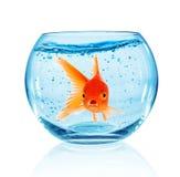 Guldfisk i akvarium Arkivbild
