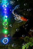 Guldfisk i akvarium med ledde ljus Royaltyfri Bild