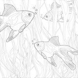 Guldfisk i ett akvarium Arkivbilder