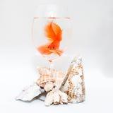 Guldfisk och koraller arkivbild