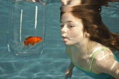 guldfisk som ser undervattens- simning Arkivbild
