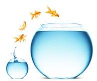guldfiskbanhoppningen ut water royaltyfri fotografi